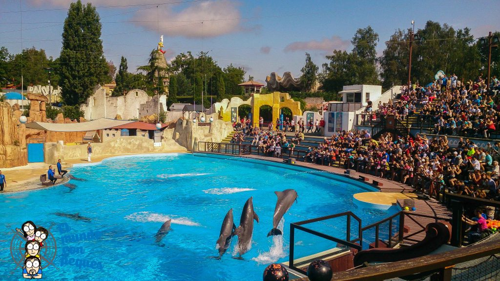 Espectáculo de delfines en el parque Asterix