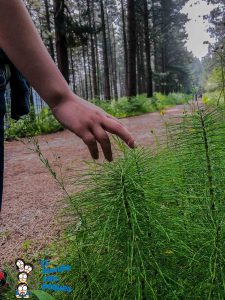 Ruta hacia el bosque de Oma
