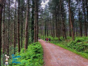 Comienzo del camino hacia el bosque de Oma
