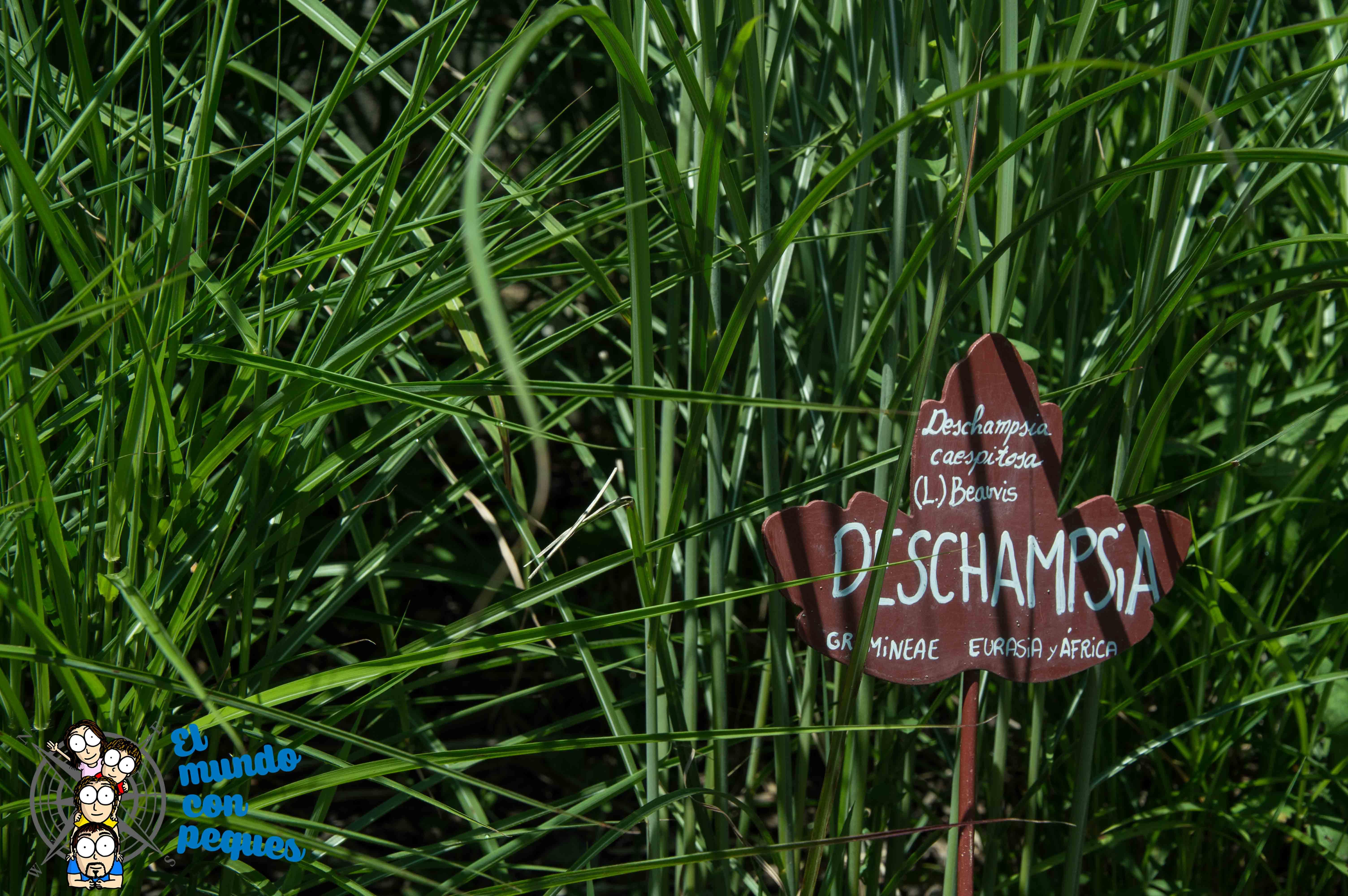 Diferentes especies en Jardín Botánico de Santa Catalina