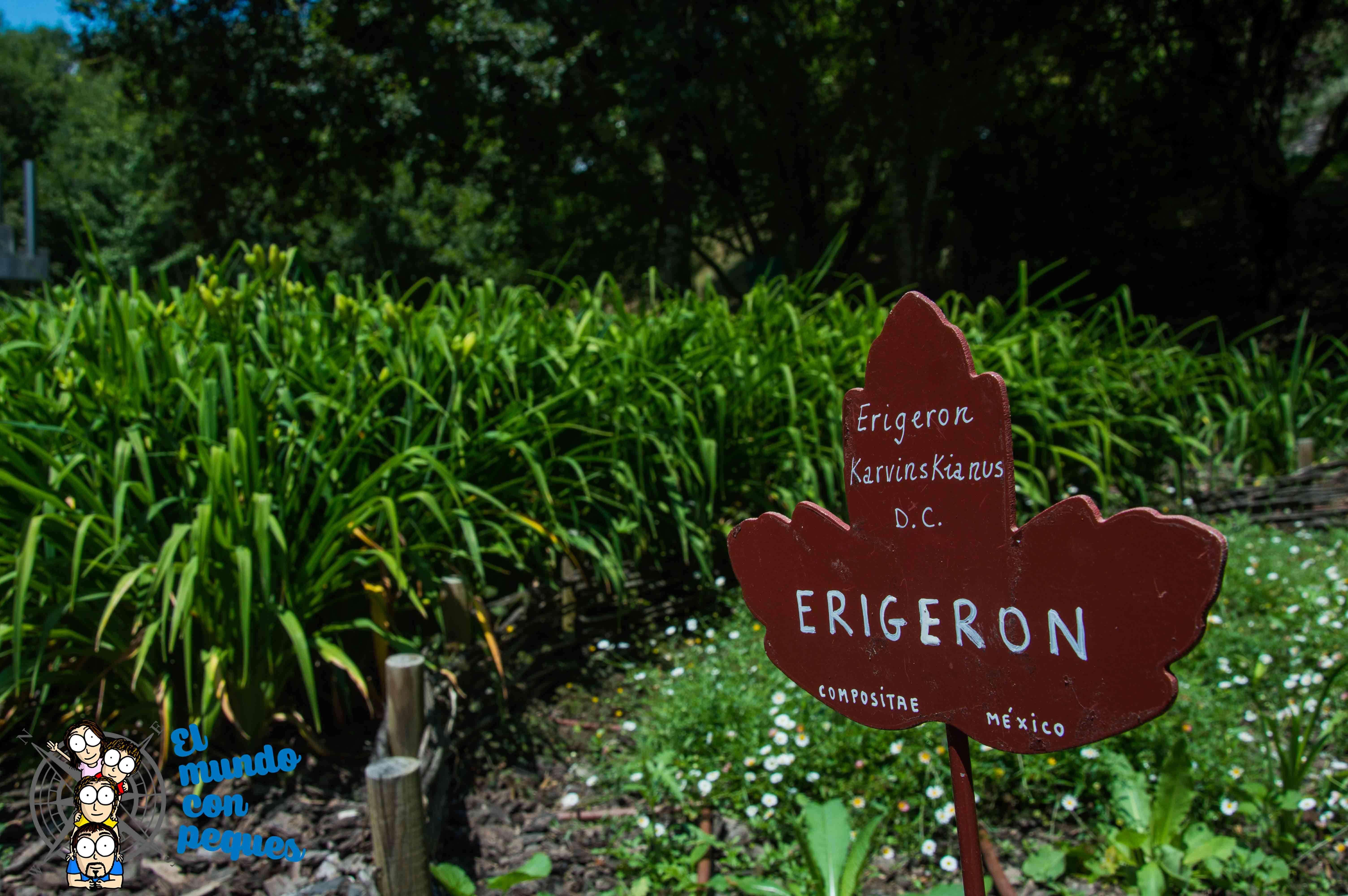 especies de plantas Jardín Botánico de Santa Catalina