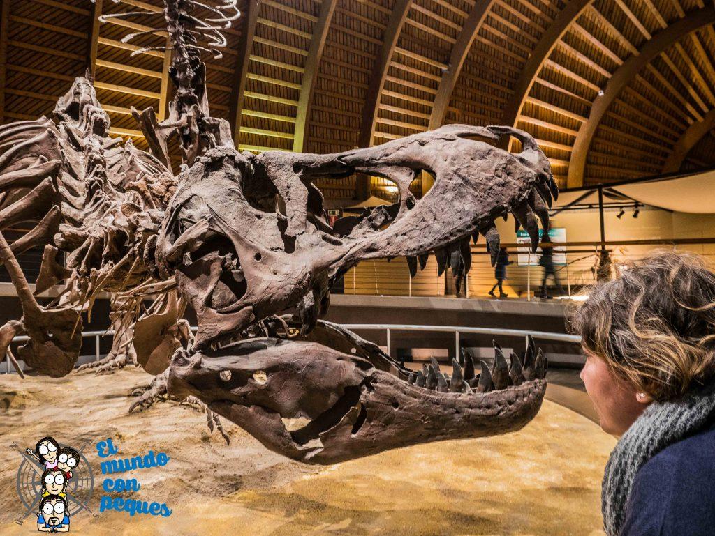 tyranosaurus rex a tamaño real en el MUJA. Los grandes dinosaurios